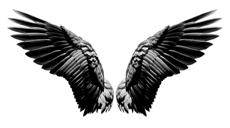 Angel wings, Natural black wing plumage isolated on white background with clipping part Stockfoto