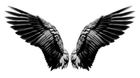Engelsflügel, natürliches schwarzes Flügelgefieder lokalisiert auf weißem Hintergrund mit Ausschnittteil