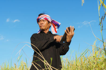 Senior farmer standing in a rice field with a tablet  Stock Photo