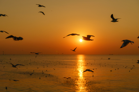 Group of silhouette seagulls flying over the sea on twilight sky at sunset Banco de Imagens - 92757334