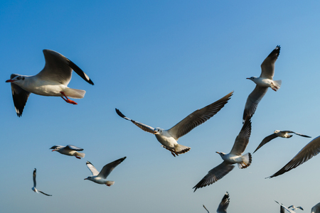 Group of seagulls flying on blue sky