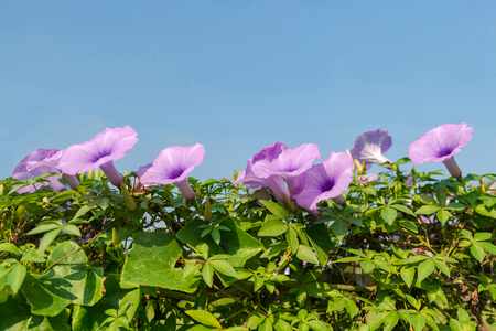 Purple flowers under blue sky