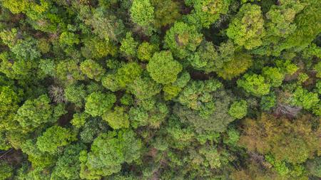 Forêt vue de dessus aérienne, fond de parc naturel