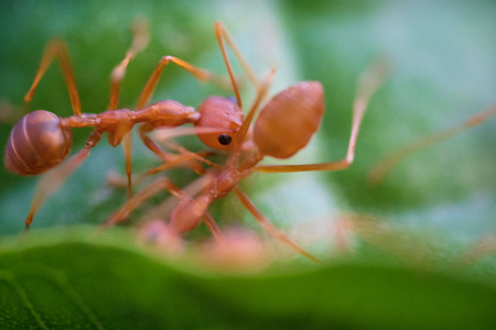 Ants macro on green leaves