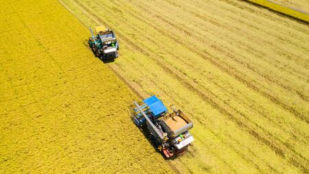 Aerial view of Harvester machine working in rice field from above Reklamní fotografie