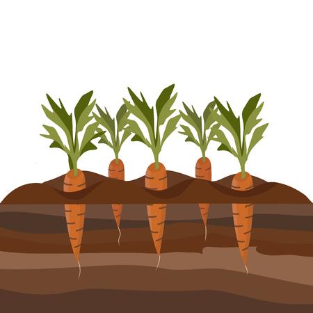 Karotten im Gartenbeet. Illustration mit Querschnitt, der das Wachstum von Karotten und Erdschichten zeigt. Vektor-Illustration im Cartoon-Stil isoliert auf weiß Vektorgrafik