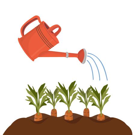 Rote Gartengießkanne bewässert Beete mit Karotten. Vektor isoliertes Objekt im Cartoon-Stil für Ihr Design