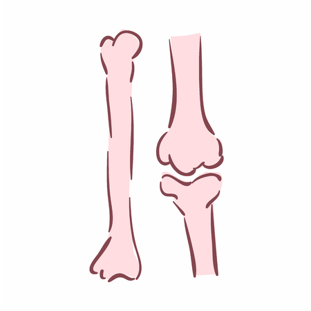Illustration of human bones. Can be used as symbol of orthopedics