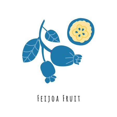 Feijoa fruit flat vector illustration. Cartoon slices of exotic, tropical fresh fruit. Clipart with typography. Isolated icon for healthy cooking menu, design element