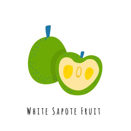 White sapote fruit flat vector illustration. Cartoon slices of exotic, tropical fresh fruit. Clipart with typography. Isolated icon for healthy cooking menu, design element