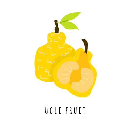 Ugli fruit flat vector illustration. Cartoon slices of exotic, tropical fresh fruit. Clipart with typography. Isolated icon for healthy cooking menu, design element 일러스트