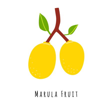 Marula fruit flat vector illustration. Cartoon slices of exotic, tropical fresh fruit. Clipart with typography. Isolated icon for healthy cooking menu,  design element