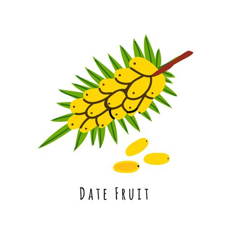 Date fruit flat vector illustration. Cartoon slices of fresh tropical fruit. Isolated icon with shadow. Creative clipart with typography for healthy cooking menu,   design element 일러스트