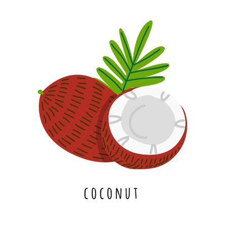 Coconut fruit flat vector illustration. Cartoon slices of tropical fresh fruit. Cocos creative clipart with typography. Isolated icon for healthy cooking menu, design element Çizim