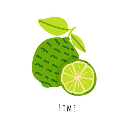 Lime fruit flat vector illustration. Cartoon slices of fresh exotic  fruit. Isolated icon with shadow. Green citrus clipart with typography for healthy cooking menu, design element 일러스트