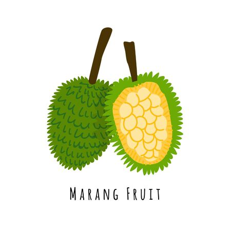 Marang or bread fruit flat vector illustration. Cartoon slices of exotic, tropical fresh fruit. Clipart with typography. Isolated icon for healthy cooking menu, design element