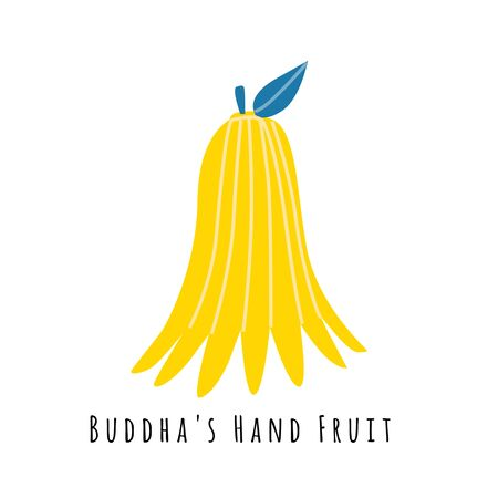 Buddhas fruit flat vector illustration. Cartoon slices of exotic, tropical fresh fruit. Citrus clipart with typography. Isolated icon for healthy cooking menu, design element 일러스트