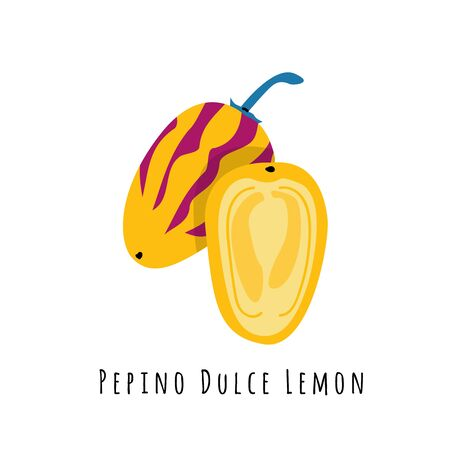 Pepino fruit flat vector illustration. Cartoon slices of exotic, tropical fresh fruit. Clipart with typography. Isolated icon for healthy cooking menu, design element 일러스트