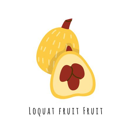 Loquat fruit flat vector illustration. Cartoon slices of exotic, tropical fresh fruit. Clipart with typography. Isolated icon for healthy cooking menu, design element 일러스트