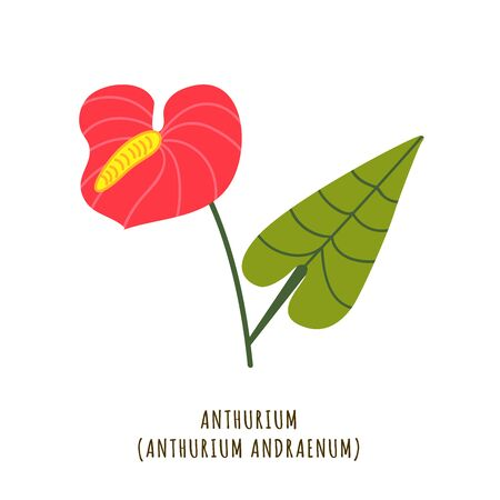 Anthurium flat vector botanical illustration. Hand drawing of exotic, tropical flower. Isolated plant clipart with typography. Icon, design element for florist shop business