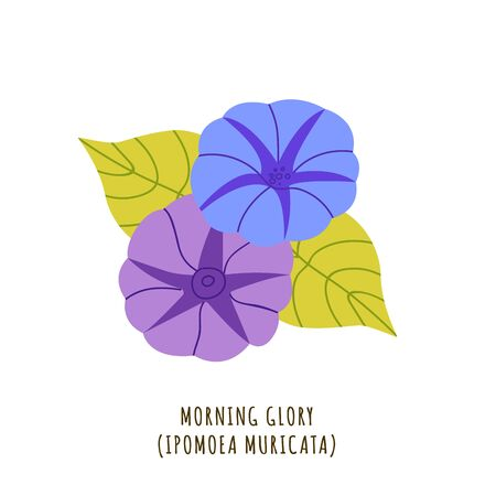 Morning glory flat vector botanical illustration. Hand drawing of exotic, tropical flower. Isolated plant clipart with typography. Icon, design element for florist shop business