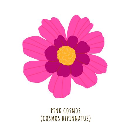 Pink cosmos flat vector botanical illustration. Hand drawing of exotic, tropical flower. Isolated plant clipart with typography. Icon, design element for florist shop business