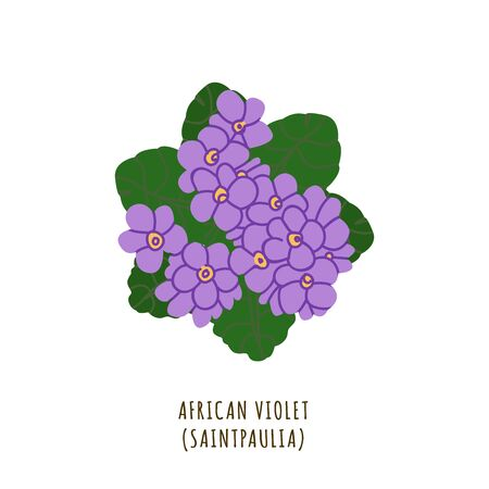 African violet flat vector botanical illustration. Hand drawing of exotic, tropical flower. Isolated plant clipart with typography. Icon, design element for florist shop business