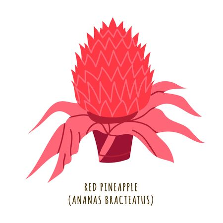 Red pineapple flat vector botanical illustration. Hand drawing of exotic, tropical flower. Isolated plant clipart with typography. Icon, design element for florist shop business Иллюстрация