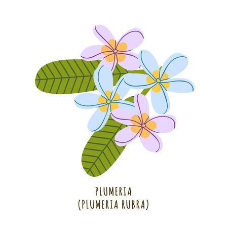Plumeria flat vector botanical illustration. Hand drawing of exotic, tropical flower. Isolated plant clipart with typography. Icon, design element for florist shop business
