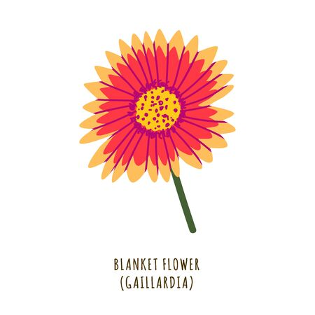 Blanket flower flat vector botanical illustration. Hand drawing of exotic, tropical plant. Isolated clipart with typography. Icon, design element for florist shop business