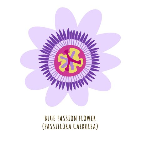 Blue passion flower flat vector botanical illustration. Hand drawing of exotic, tropical plant. Isolated clipart with typography. Icon, design element for florist shop business Illustration