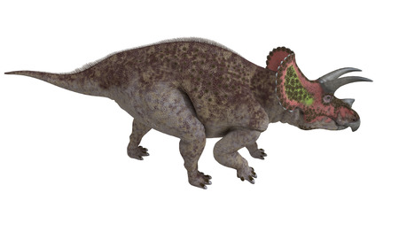 triceratops: Triceratops