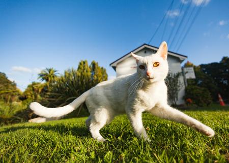 aotearoa: wandering cat Stock Photo