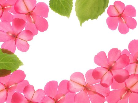 Pink flowers and leaves, frame design