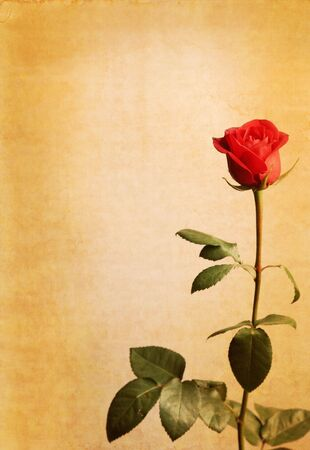 grunge paper background with red rose