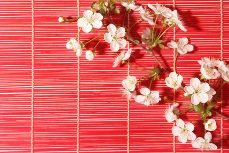 blossom Cherry on red bamboo background Stock Photo