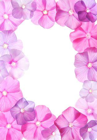 Pink flowers, frame design