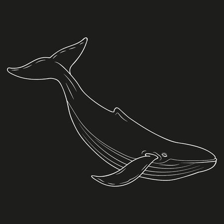 line style whale illustration on black background. Vector.