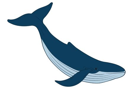 Vector illustration of whale in cartoon style. Isolated. Vettoriali