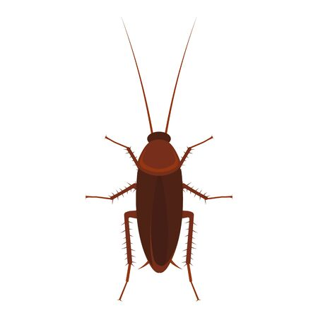 Cockroach vector illustration isolated on a white background.