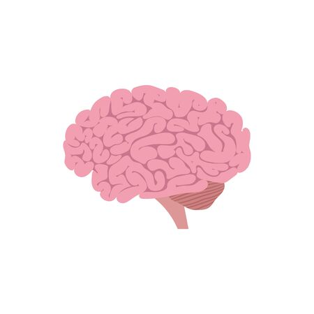 Vector illstration of brain. Flat design. Illustration