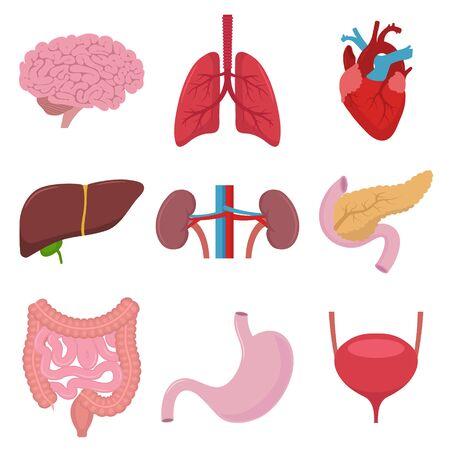 Ilustración vectorial del icono de órganos humanos. Diseño plano. Ilustración de vector