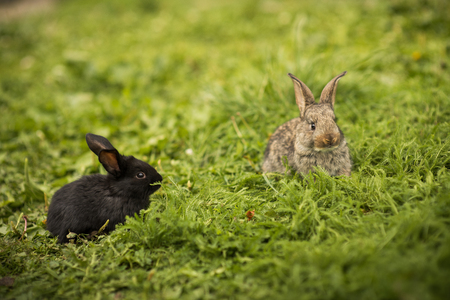 Two little rabbit on green grass Stock Photo