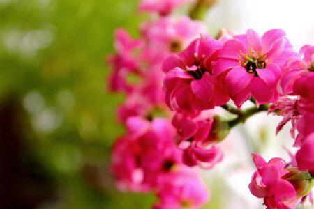 nature, flowers Stock Photo