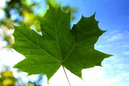 blu: nature, green leaf Stock Photo