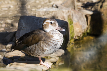 lonely bird: Beautiful lonely bird