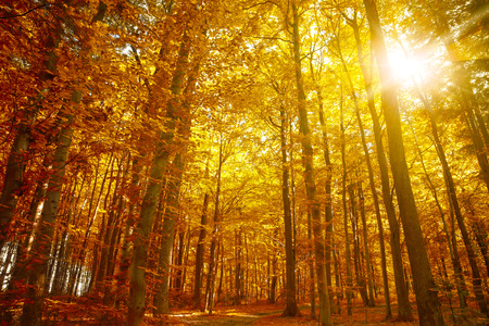 feuillage: Golden autumn, Arbres d'automne feuilles tombent