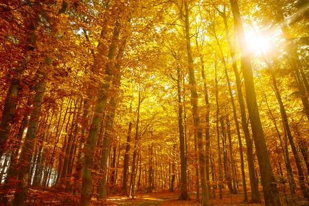 Gouden herfst, Autumn Trees Bladeren van de daling Stockfoto