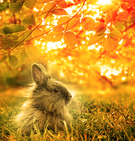 rabbit: autumnal rabbit. Beautiful Art Design  background Stock Photo