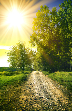 dirt road in a sunny spring forest